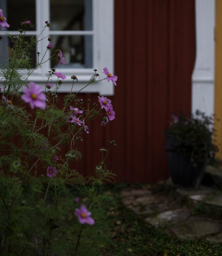 Flowers_hus